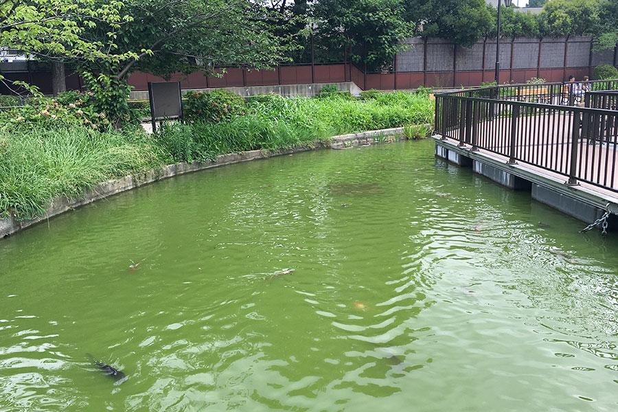 上野恩賜公園 ボート池 北側