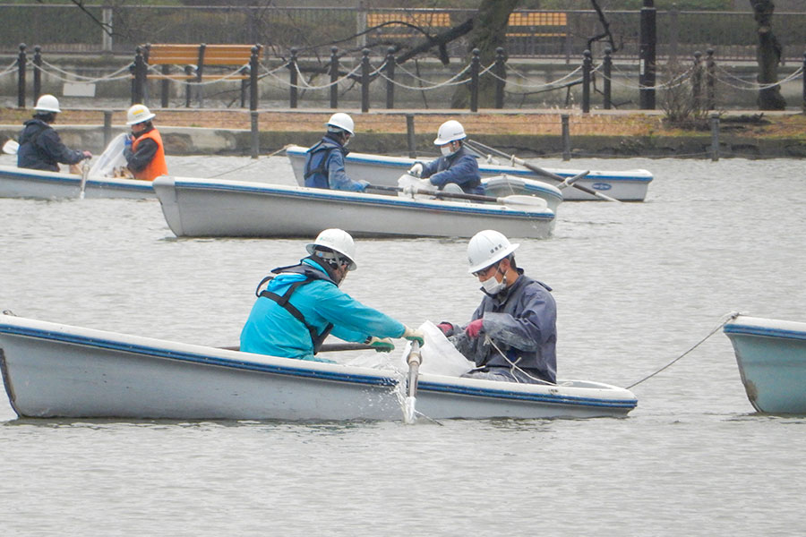 上野恩賜公園 ボート池