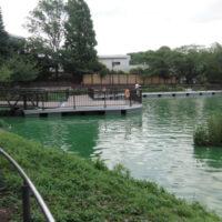 東京都 上野公園 不忍池